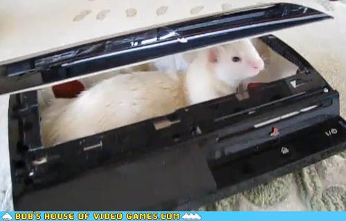 funny video game photos - Ferrets Love Only The Finest